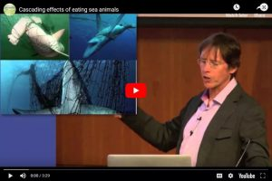 Cascading Effects of Eating Sea Animals