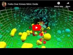 Endothelial Cells & Nitric Oxide