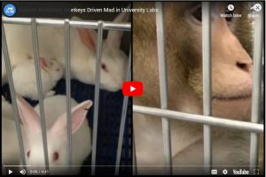 Rabbits Mutilated, Monkeys Driven Mad in University Labs
