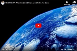 What You Should Know About Fish & the Ocean