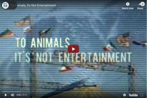 To Animals, It's Not Entertainment